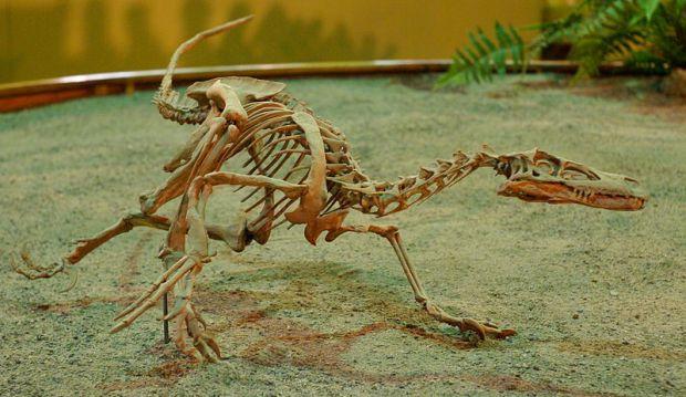 Velociraptor on display at Wyoming Dinosaur Centre